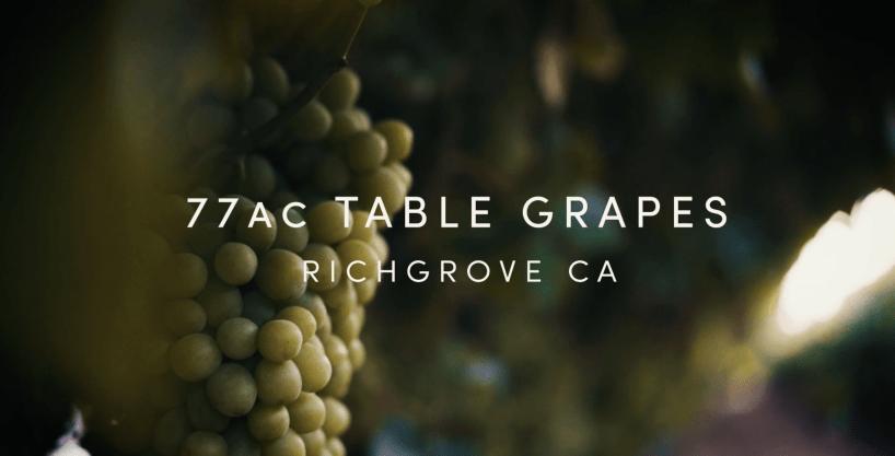 77.15 Ac. Table Grape Ranch