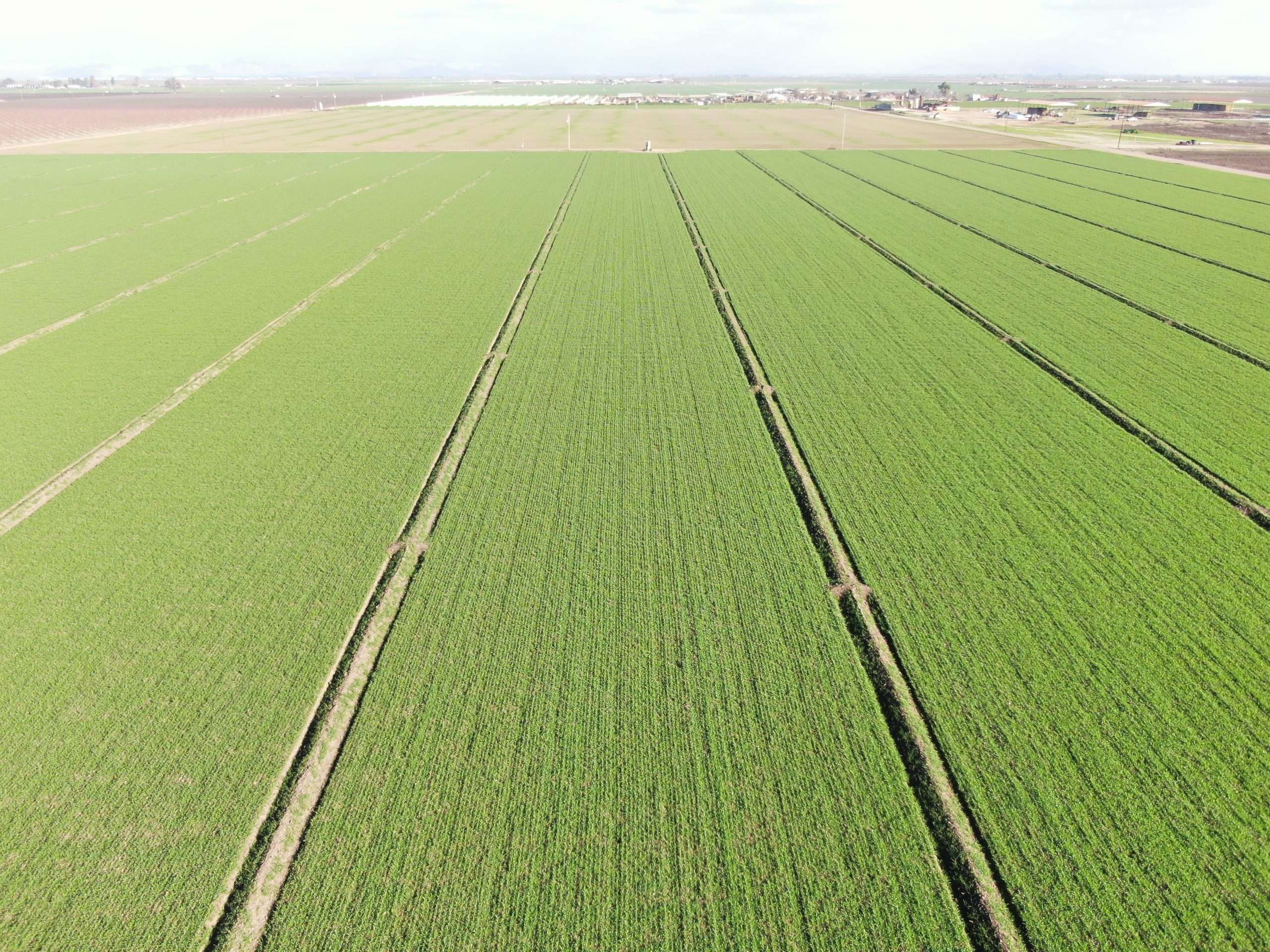 159.48 Acres Land and Calf Ranch, Tulare, CA