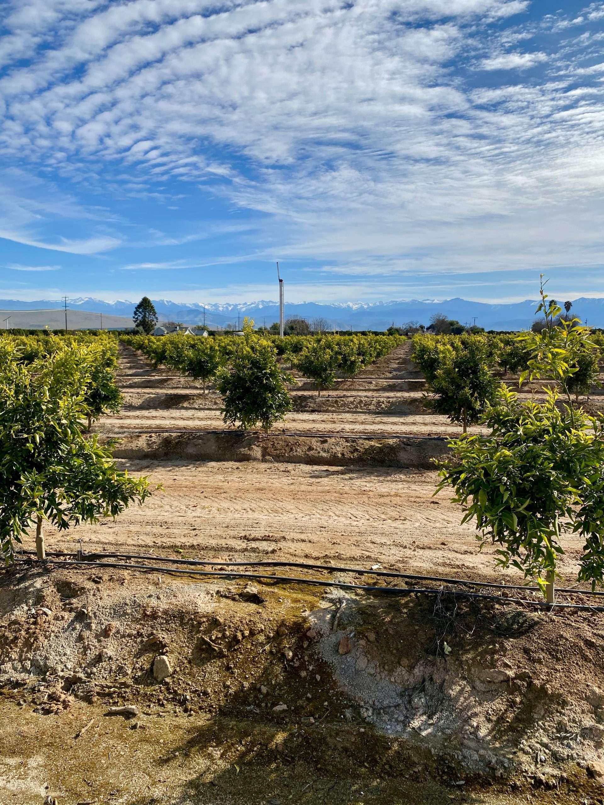 59.45 Acres Citrus Visalia, CA