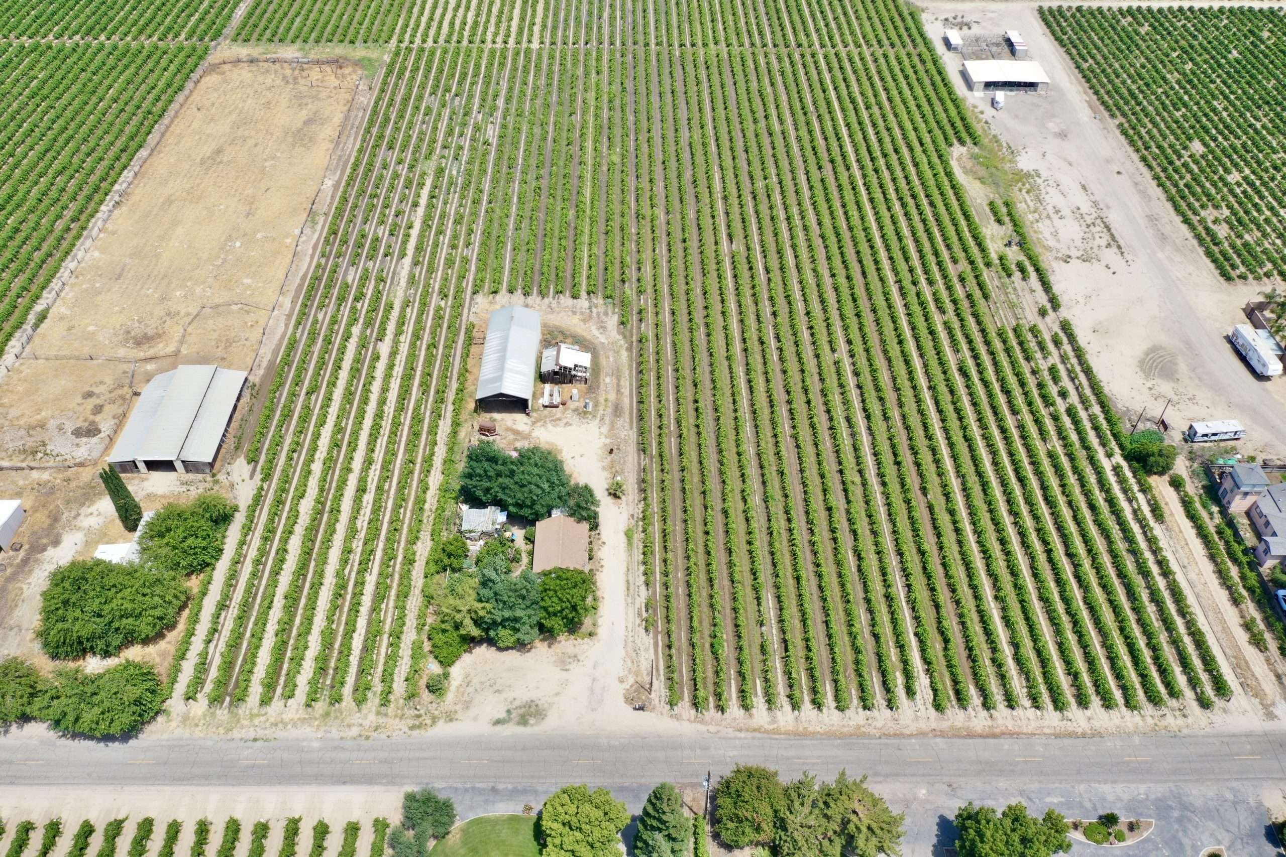 20 Acre Vineyard – Fresno County