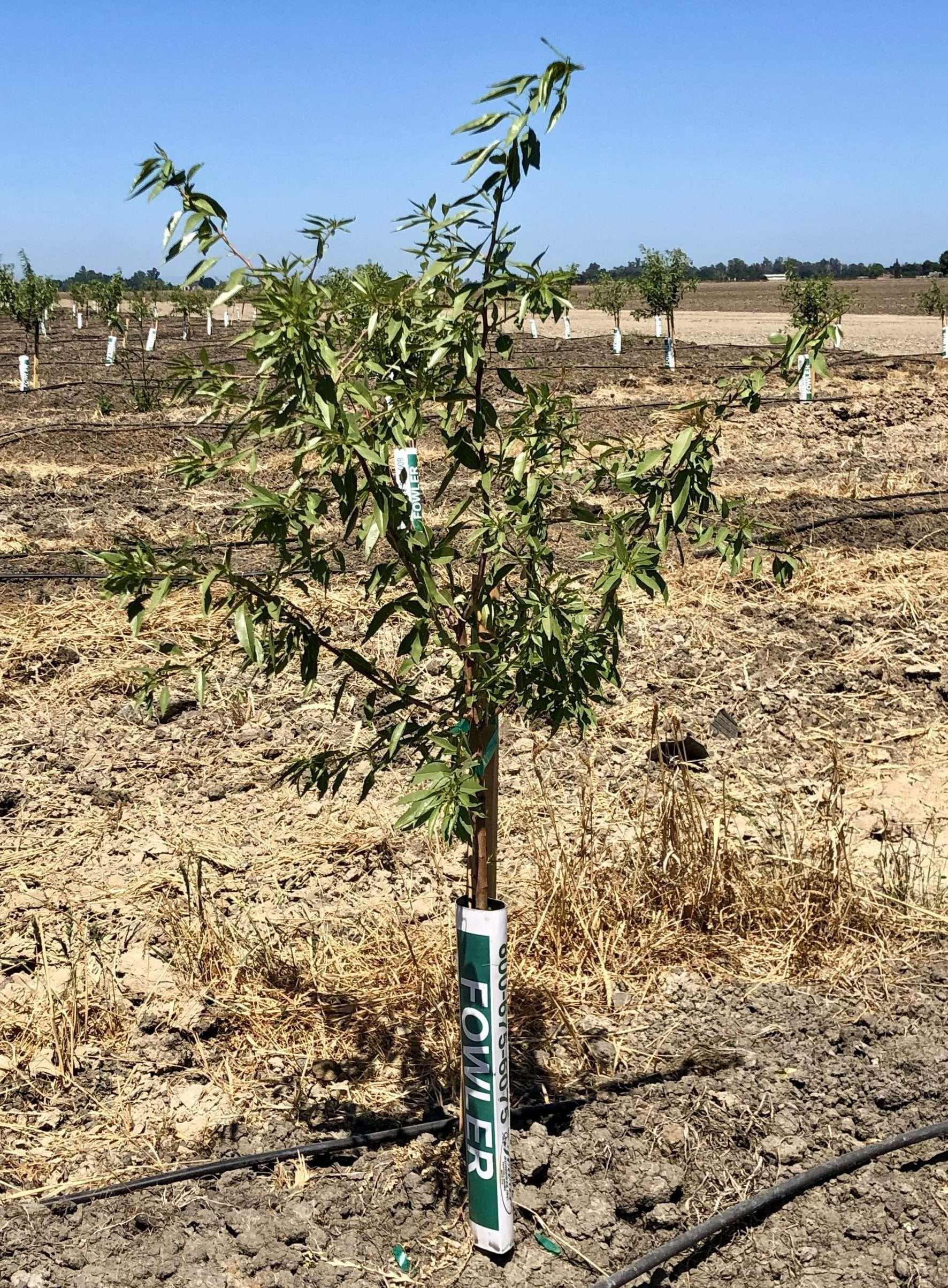 212.3 Acres Almonds – Merced, CA