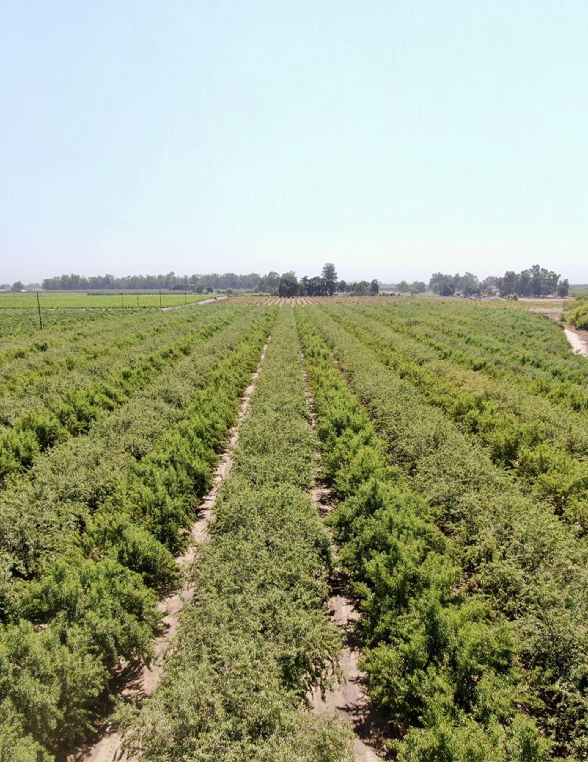 +/-22.8 Acres – Almonds – Fresno, CA