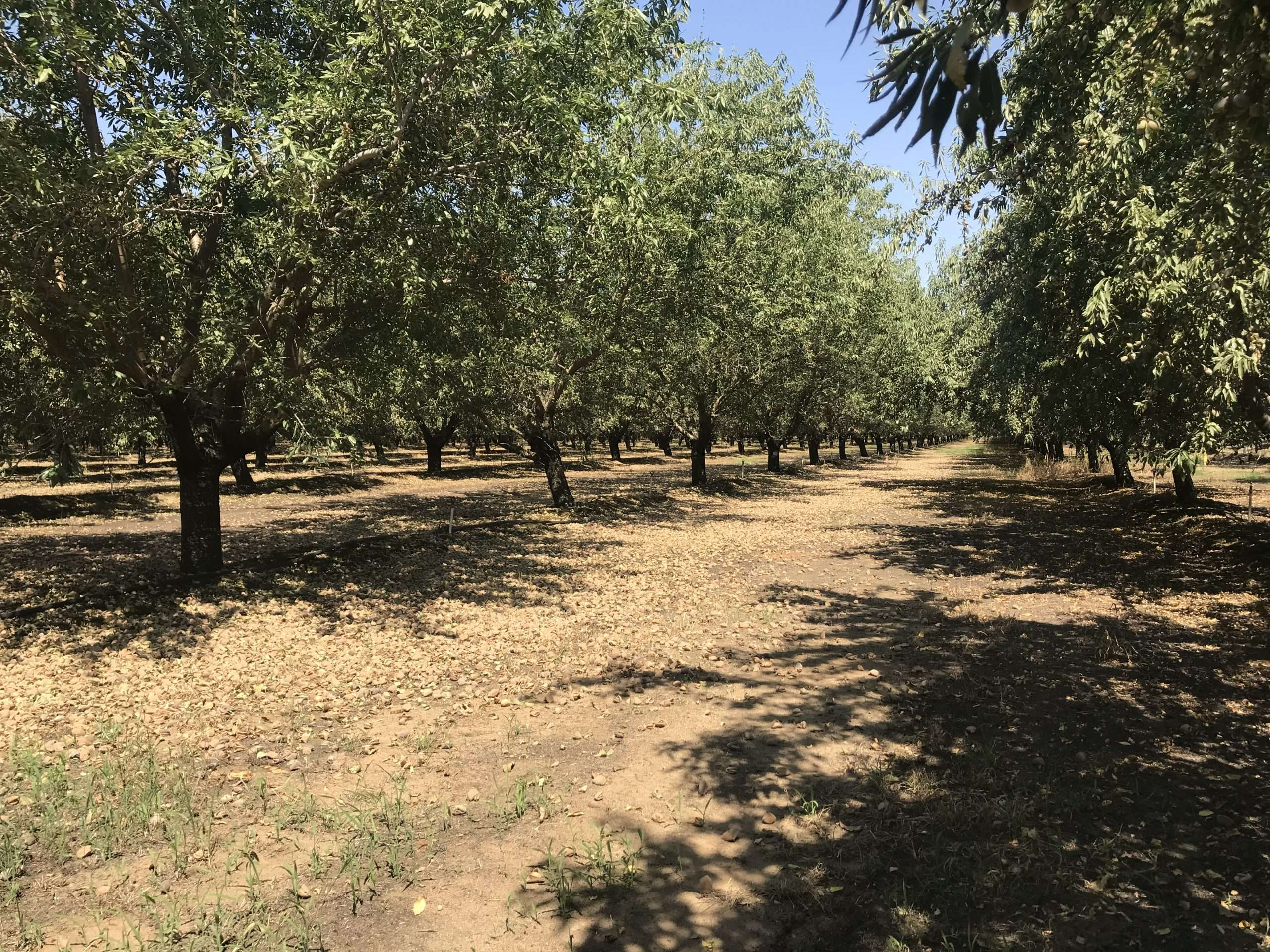 69.2 Acres – Almonds – Turlock, CA