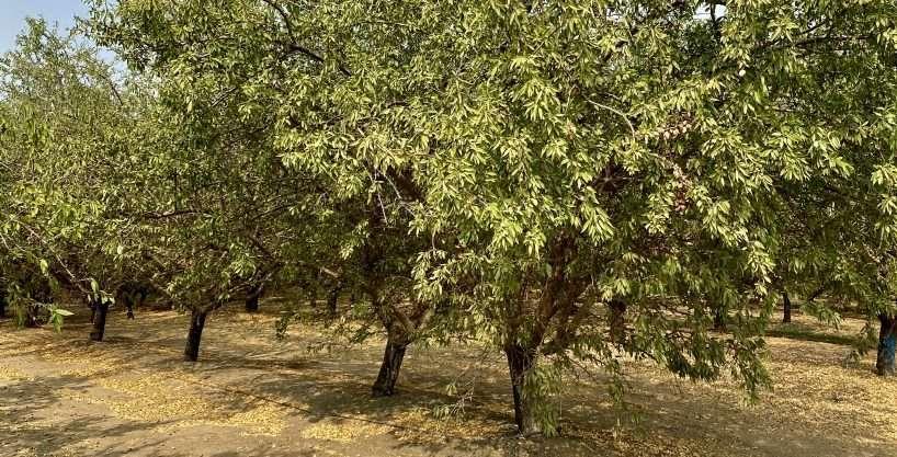 378.64 Acres Almonds – La Grange, CA – Stanislaus