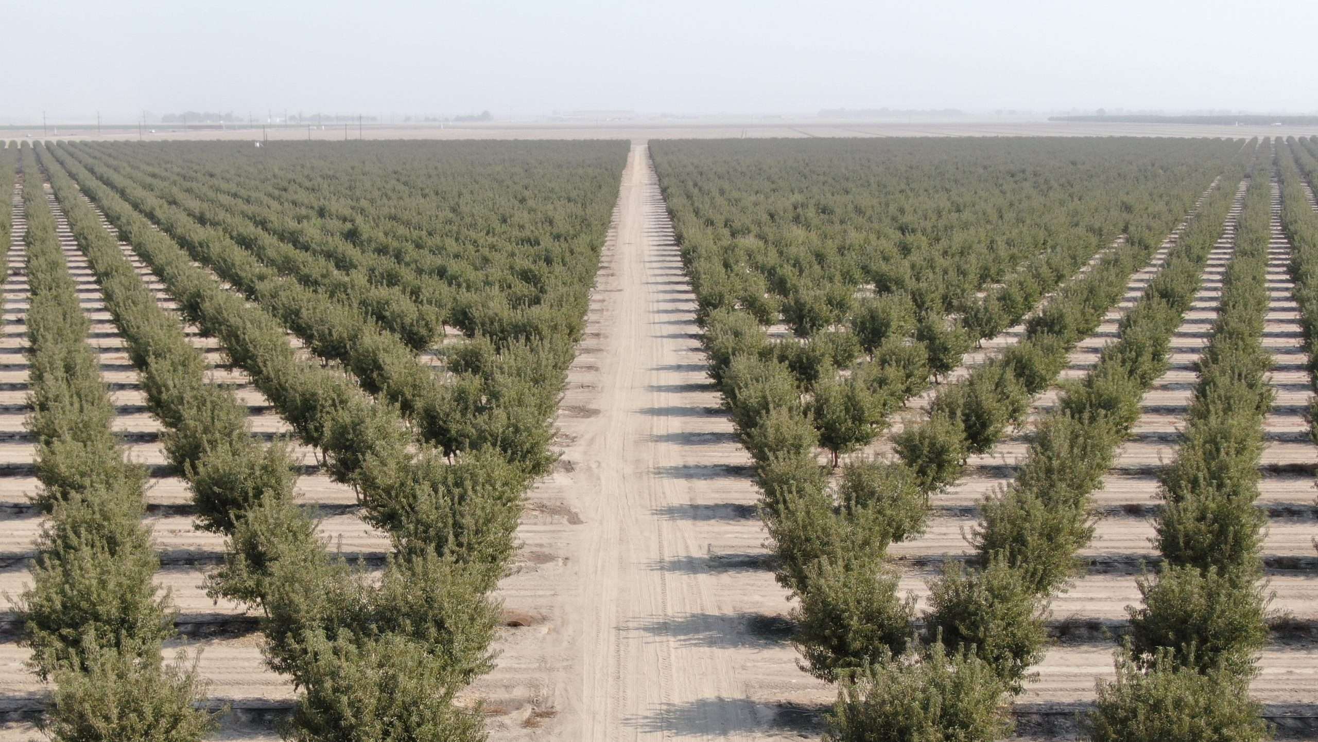 153.6 Acres Almonds, Hanford, CA
