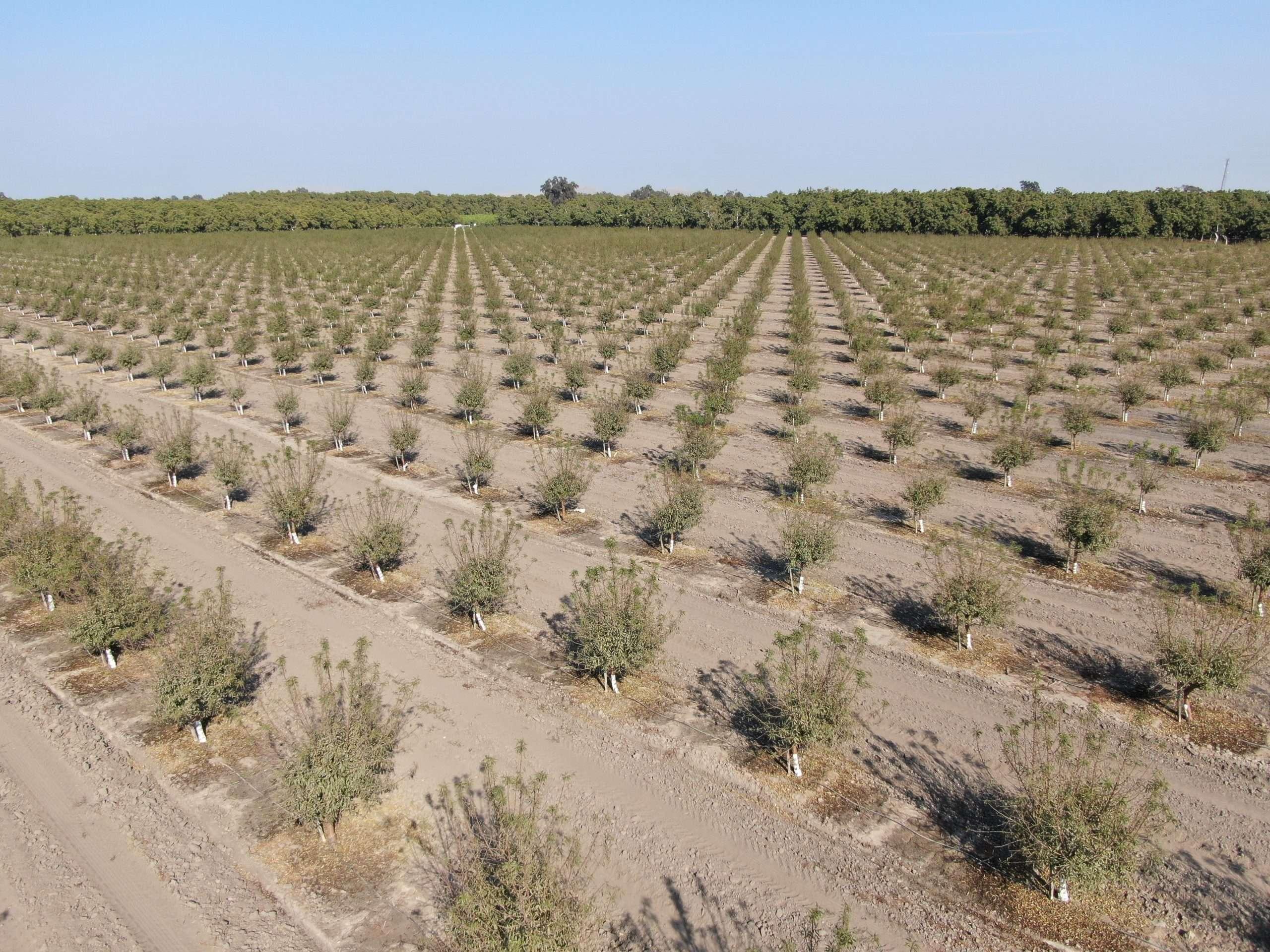 +/-40.6 Acres Almonds, Visalia, CA