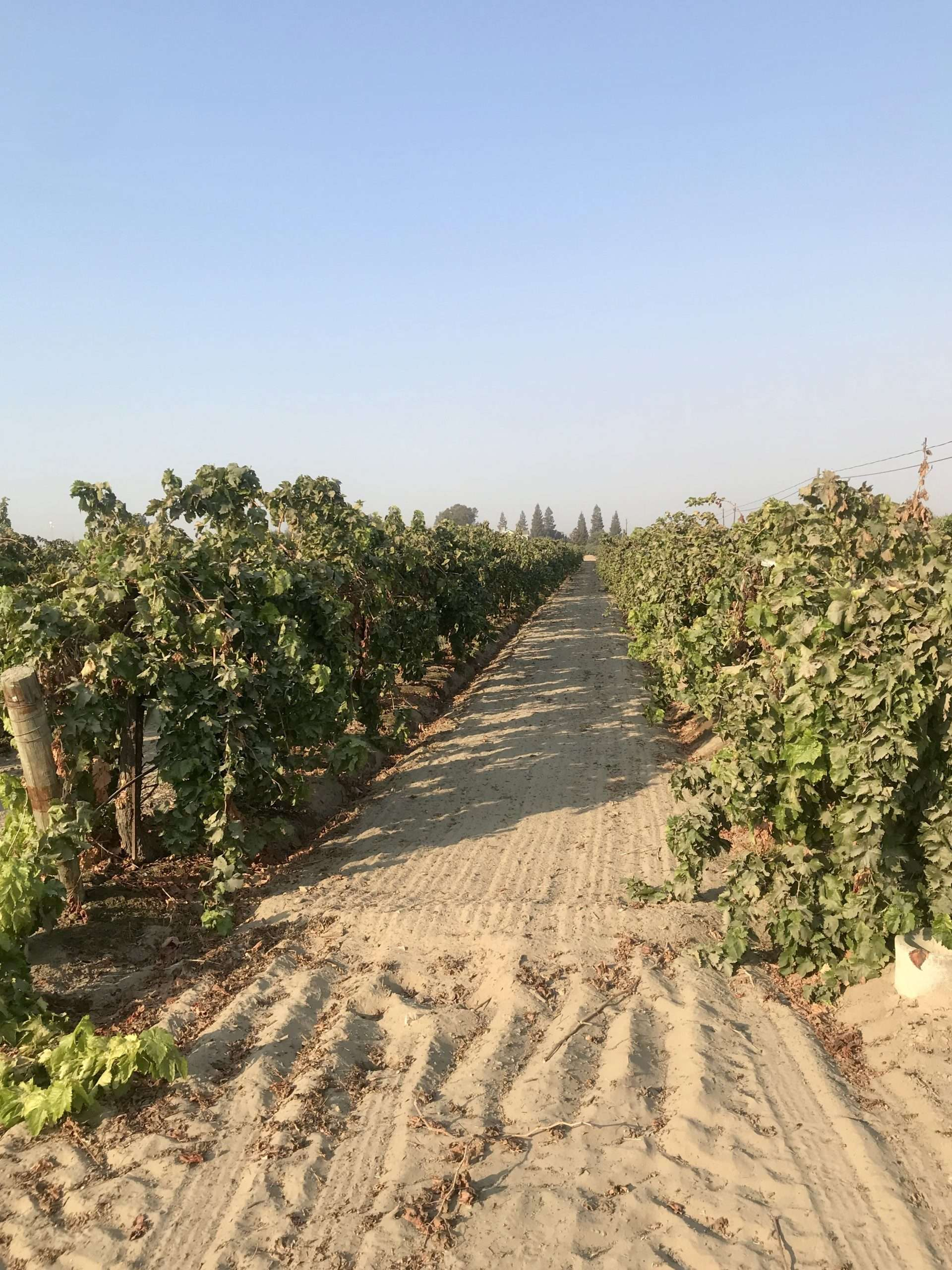 +/-57.75 Acre Vineyard – Fresno, CA