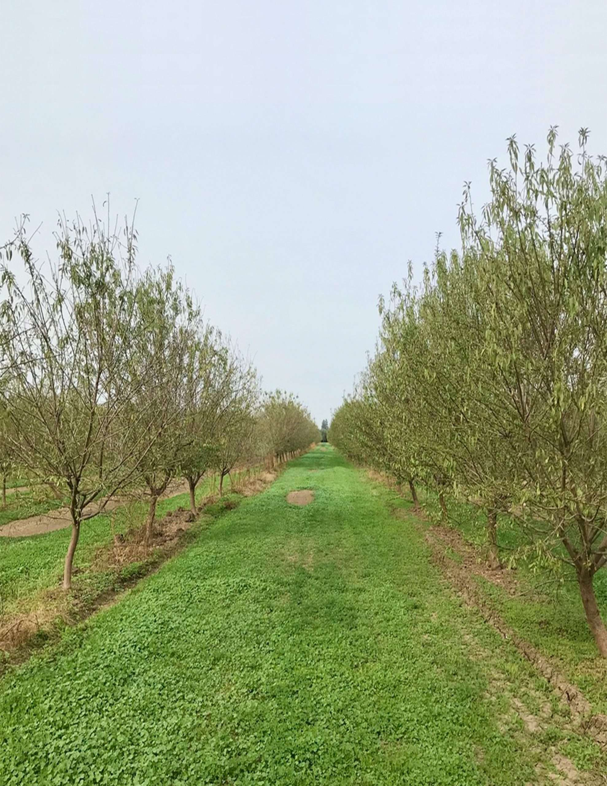 +/-73.15 Acres – Almonds & Open Land with Home