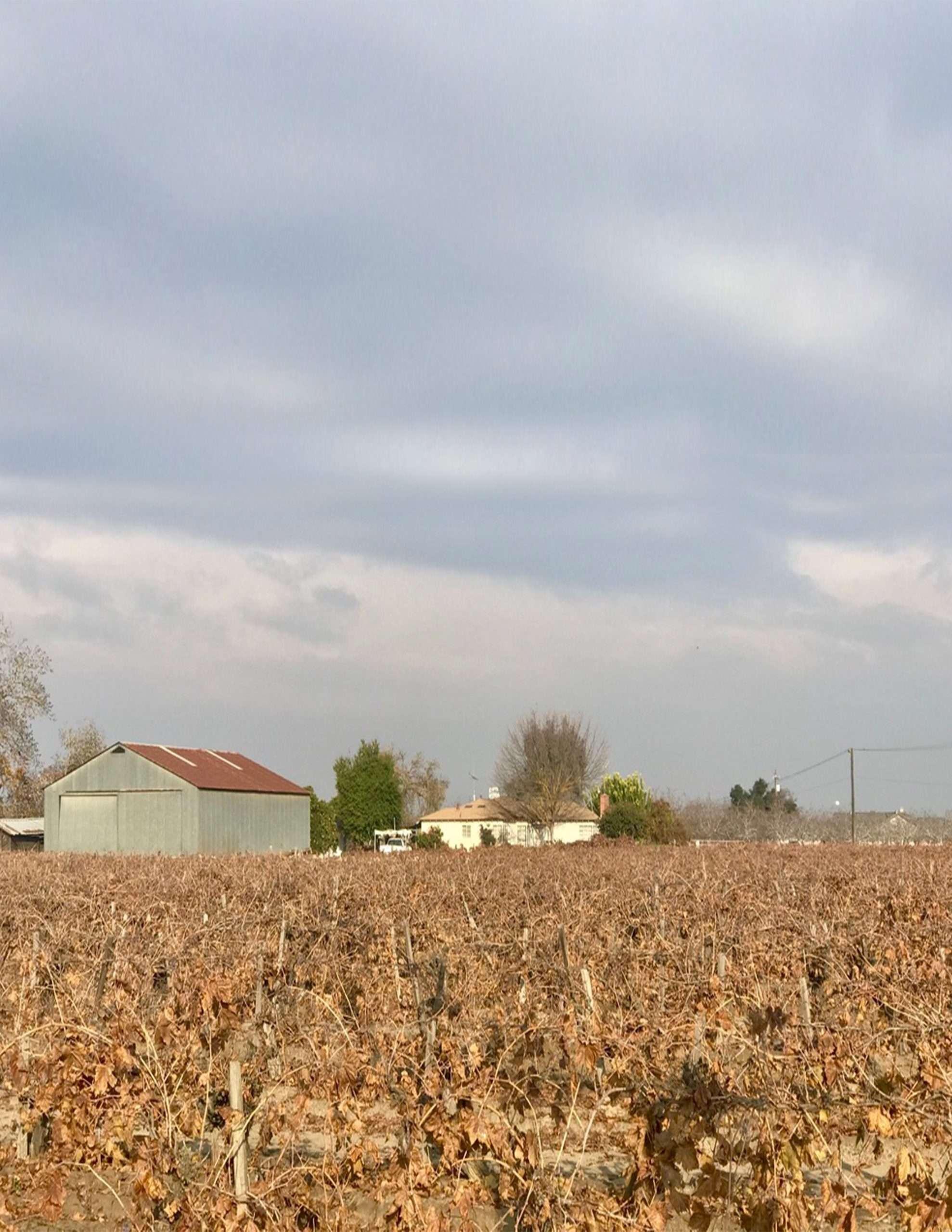 +/-78.2 Acres – Vines & Open Land