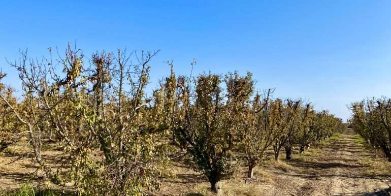 CA-farms-for-sale-15