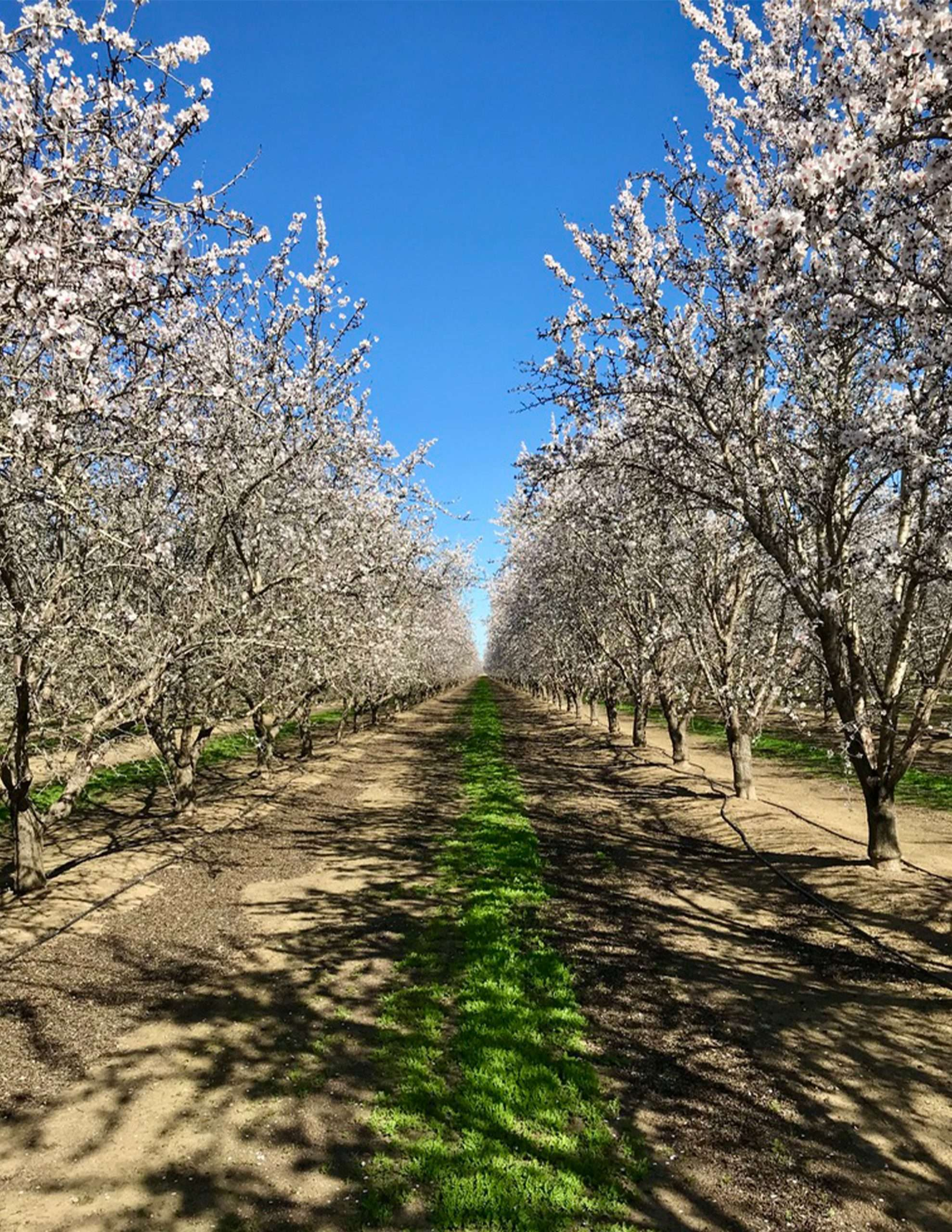 +/-646.12 Acres – Almonds and Open Land – Arbuckle, CA