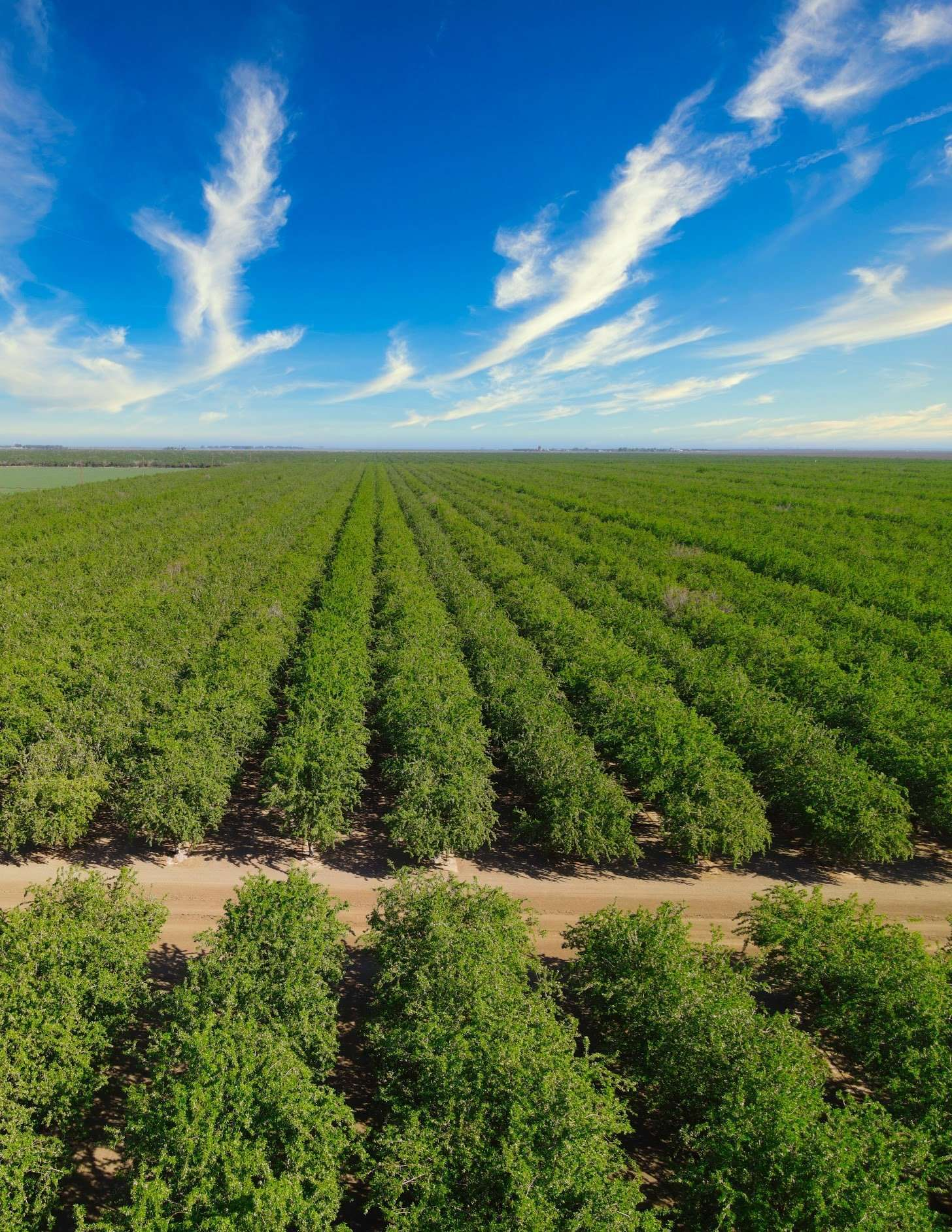 +/-2,184.14 Acres – Almonds and Row Crops – Fresno County, CA