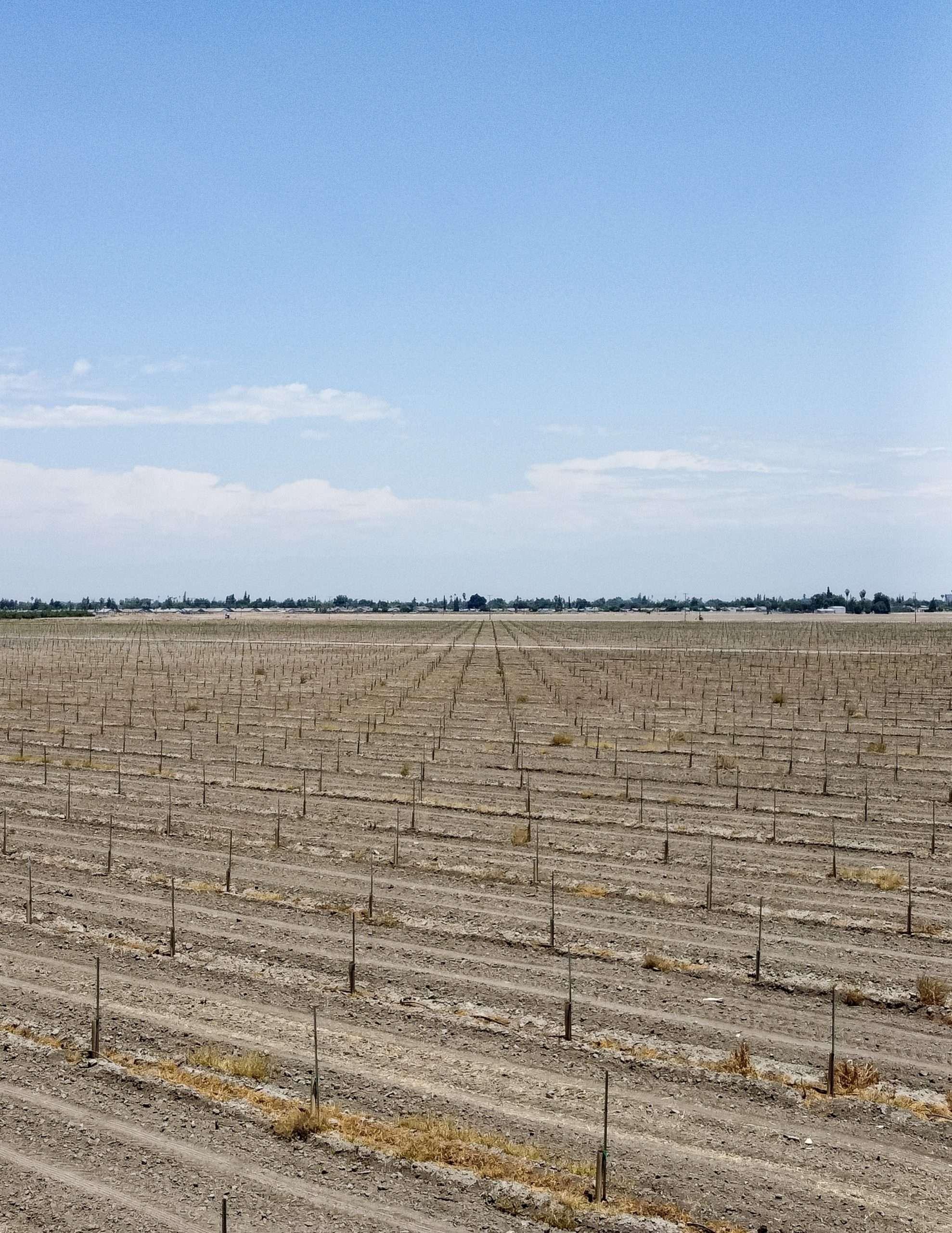 +/-117.75 Acres – Pistachios – Tulare, CA