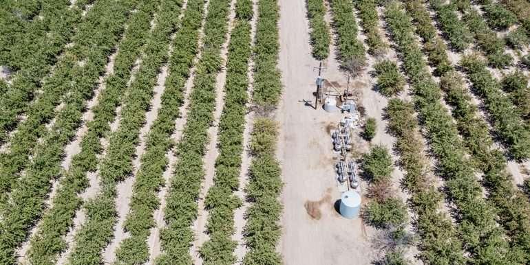 +--333 acres almonds - Doug-2