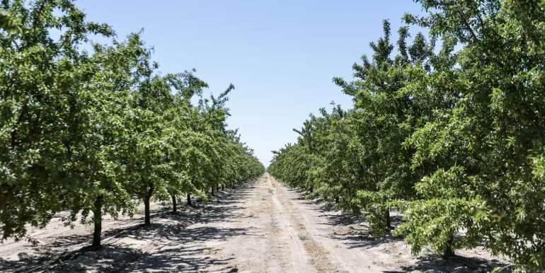 +--333 acres almonds - Doug-28
