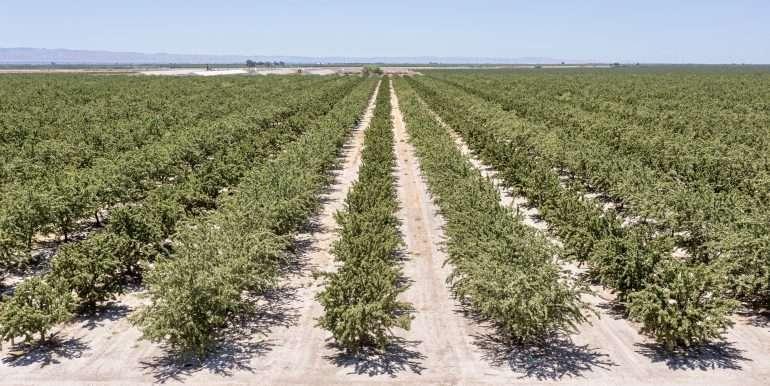 +--333 acres almonds - Doug-4