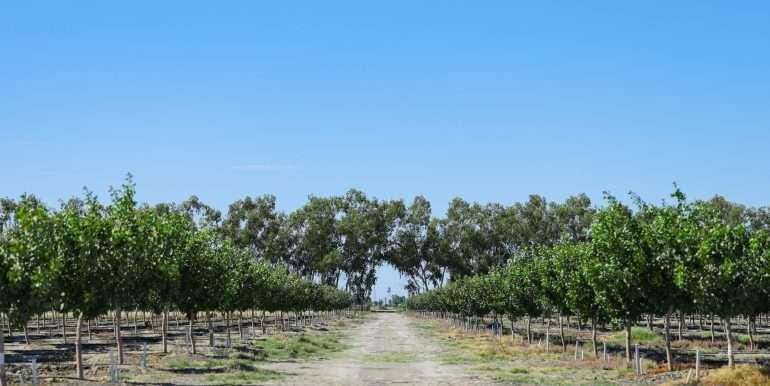 +--97.9 Acres – Pistachios- Alpaugh-5