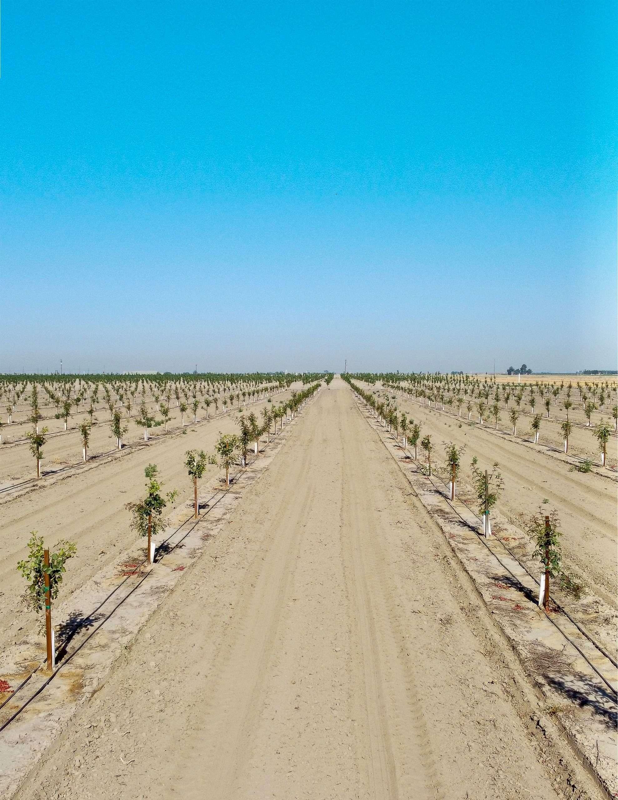 +/-38.75 Acres – Pistachios – Visalia, CA