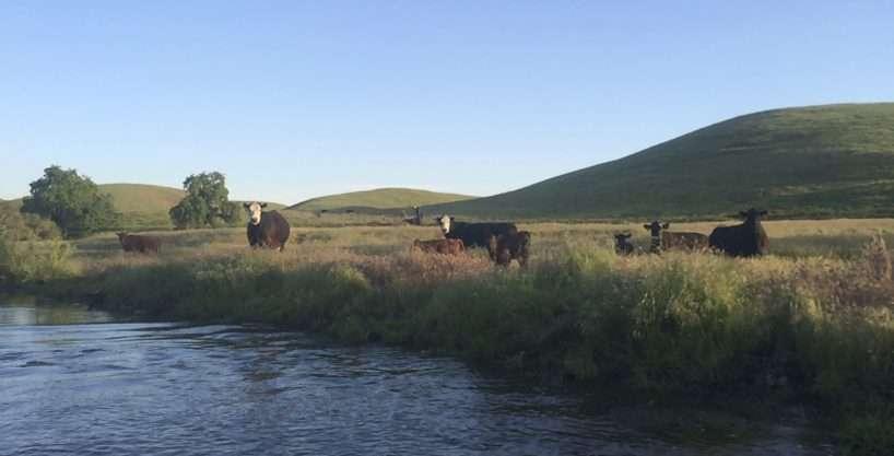 Hawker Ranch – Tulare County, CA