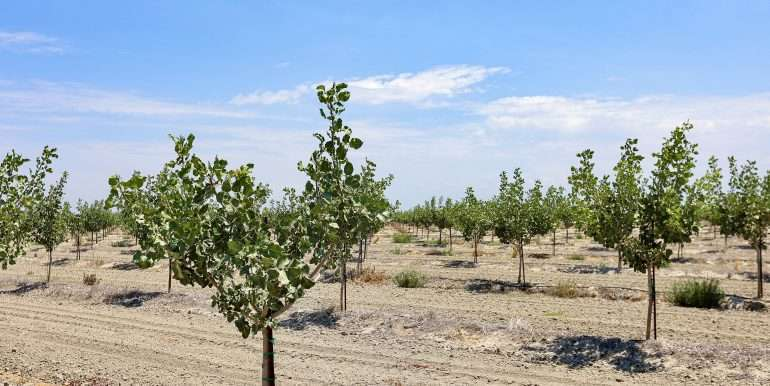 Toor +--239.19 Acres Pistachios and Open Land Hanford-19