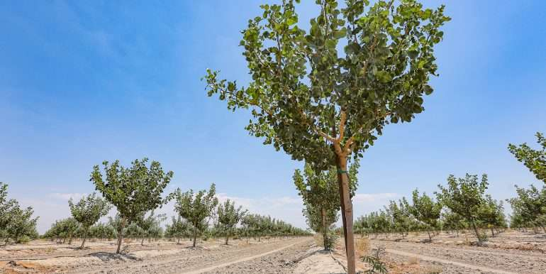 Toor +--239.19 Acres Pistachios and Open Land Hanford-35