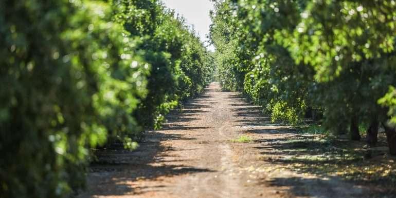 Toor +--84.77 Acres Almonds Pixley-4
