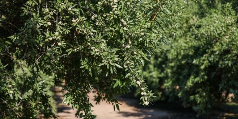 Toor +--84.77 Acres Almonds Pixley-8