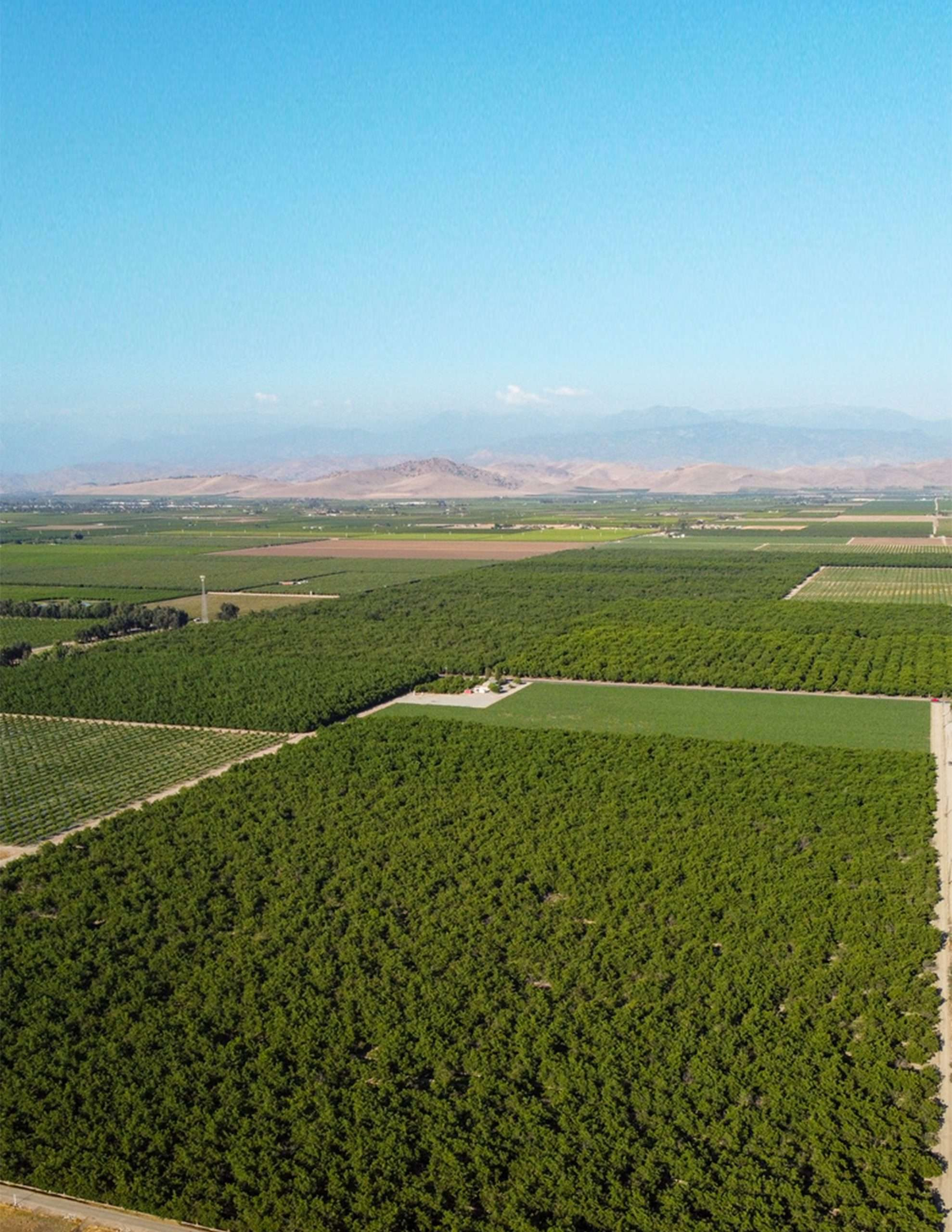 +/-80 Acres – Vines & Walnuts – Visalia, CA
