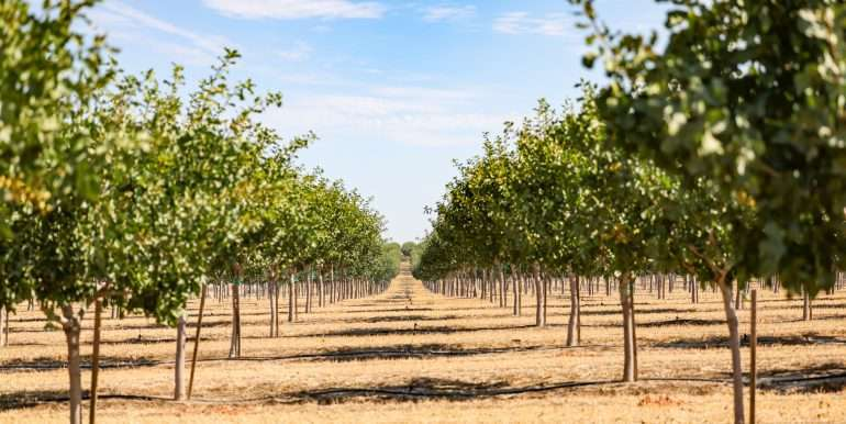 280 Acres - Pistachios and Open Ground - Ducor-18