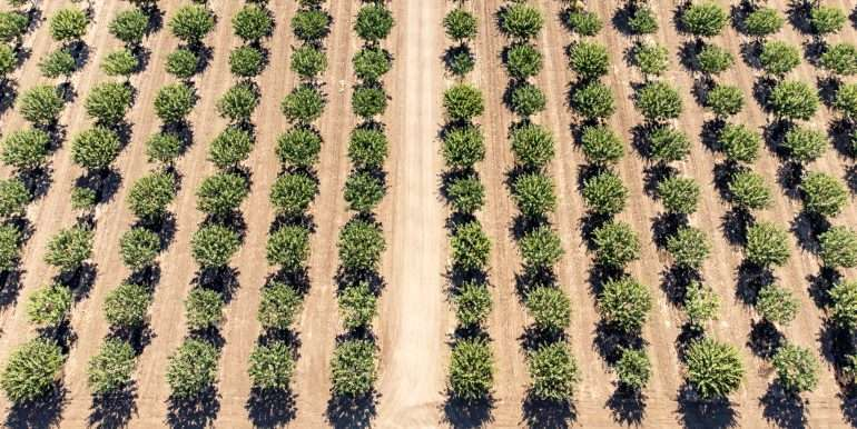 280 Acres - Pistachios and Open Ground - Ducor-29