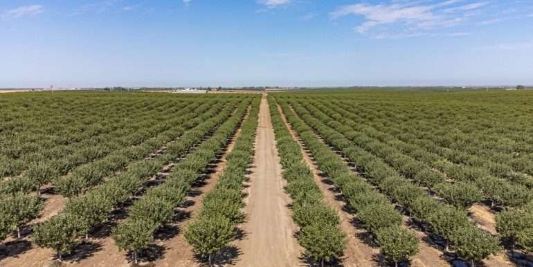280 Acres - Pistachios and Open Ground - Ducor-30
