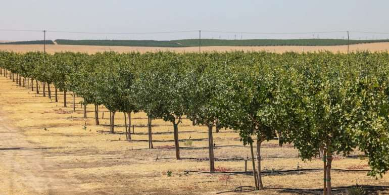 280 Acres - Pistachios and Open Ground - Ducor-31