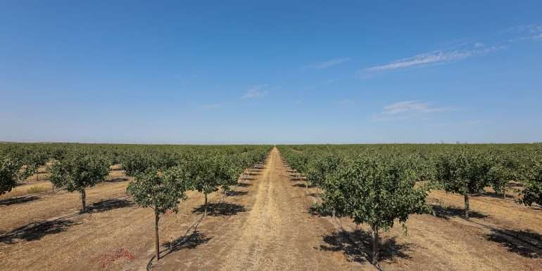 280 Acres - Pistachios and Open Ground - Ducor-32