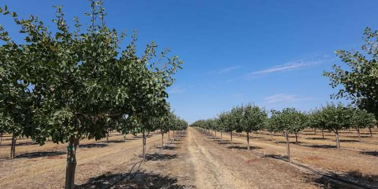 280 Acres - Pistachios and Open Ground - Ducor-33