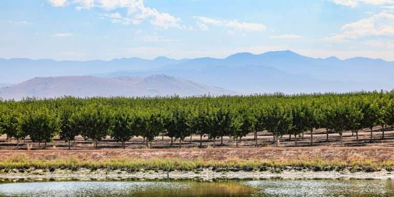 280 Acres - Pistachios and Open Ground - Ducor-9