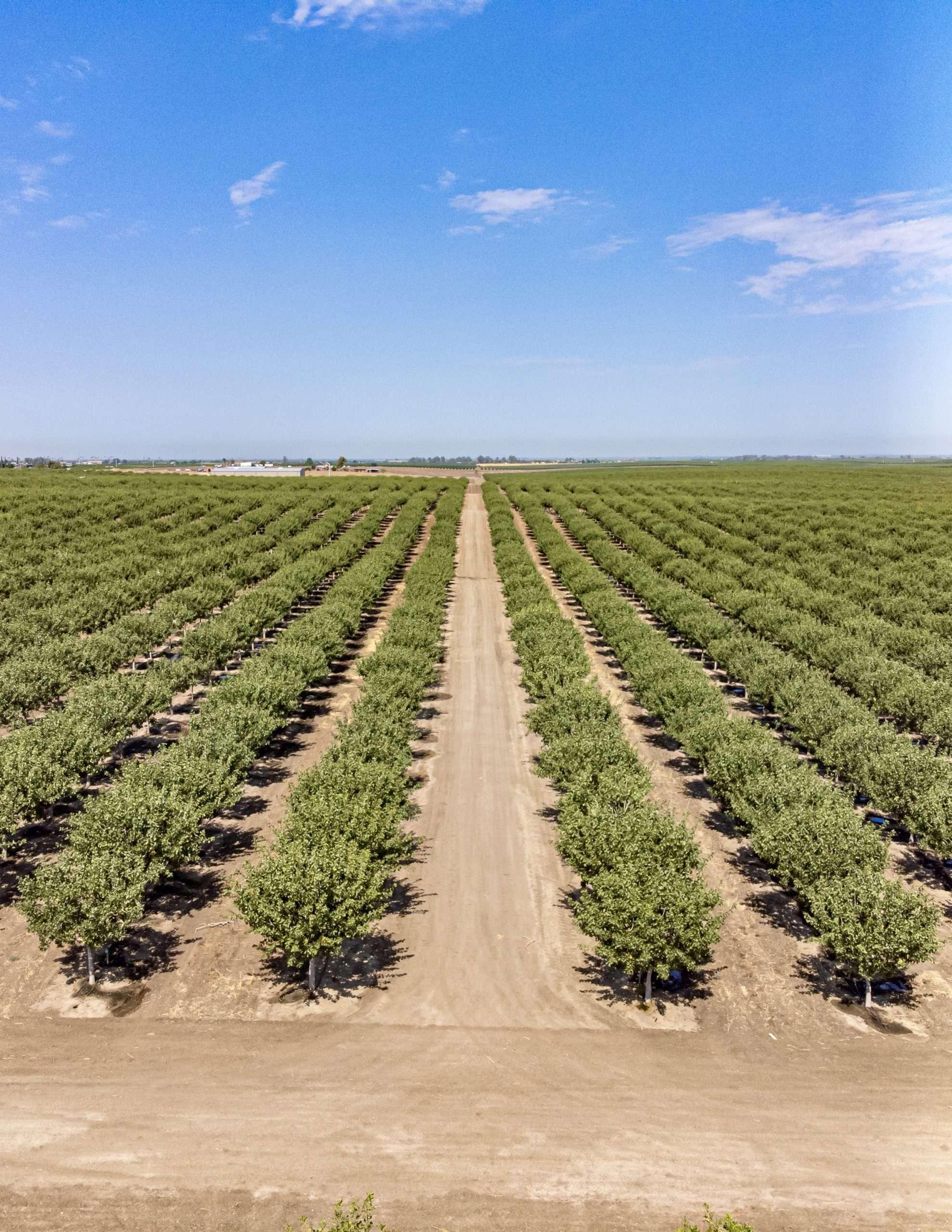 +/-280 Acres – Pistachios & Open Land – Ducor, CA