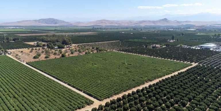 7-7-2021 vines and citrus-6