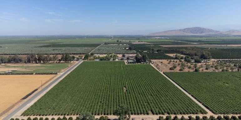 7-7-2021 vines and citrus-7