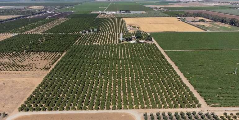 7-7-2021 vines and citrus-8