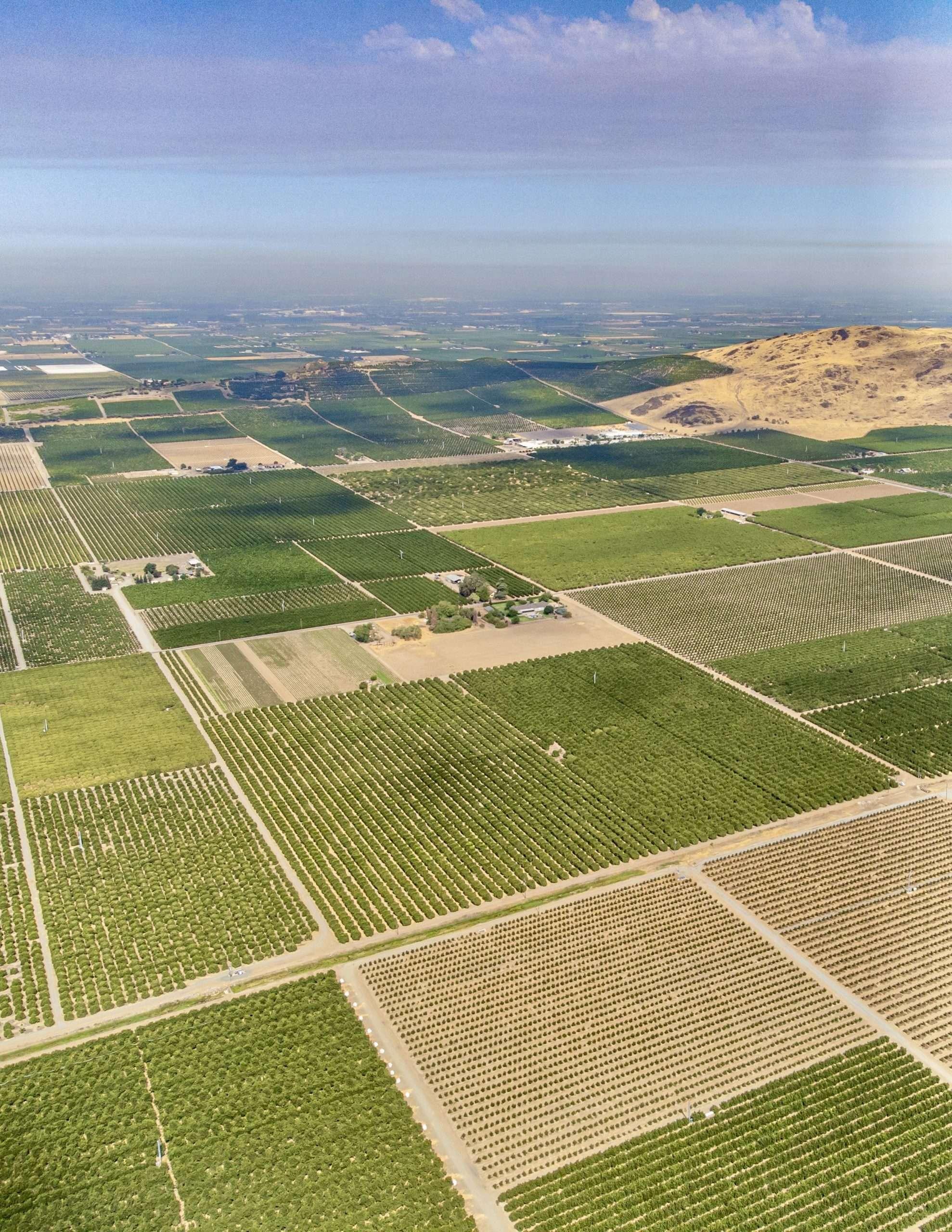 +/-40.79 Acres – Citrus – Dinuba, CA
