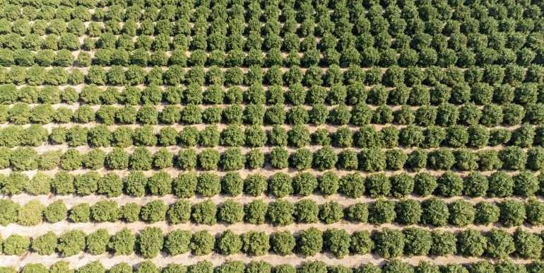 Ben's +--40.79 acres - Citrus - Dinuba-10