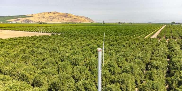 Ben's +--40.79 acres - Citrus - Dinuba-11