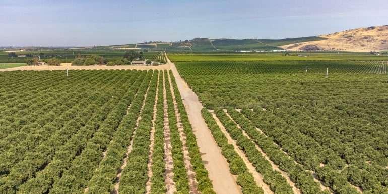 Ben's +--40.79 acres - Citrus - Dinuba-2