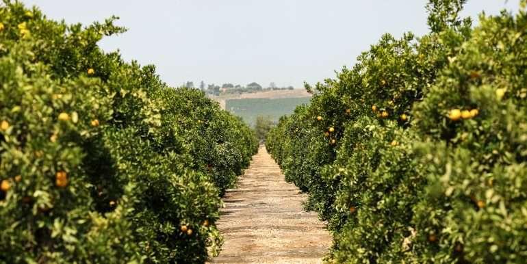 Ben's +--40.79 acres - Citrus - Dinuba-20