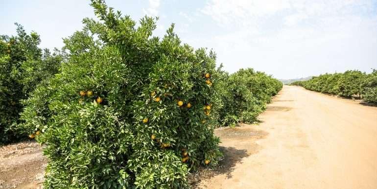 Ben's +--40.79 acres - Citrus - Dinuba-25