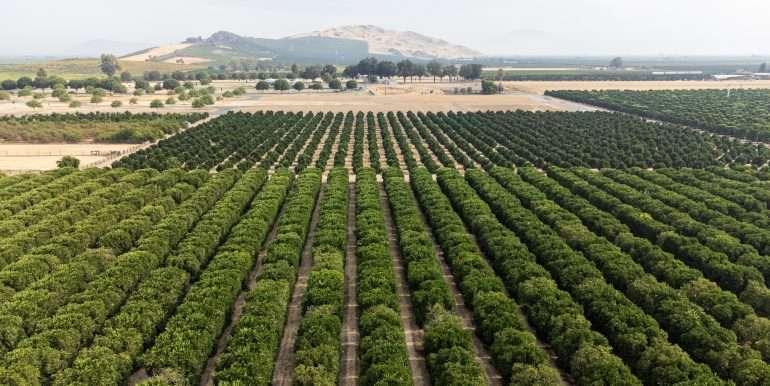 Doug - 36 Acres Citrus Rd 100 Dinuba-14