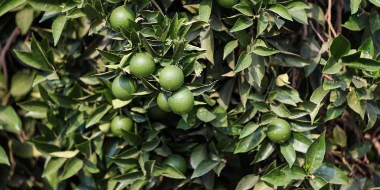 Doug - 36 Acres Citrus Rd 100 Dinuba extras-2