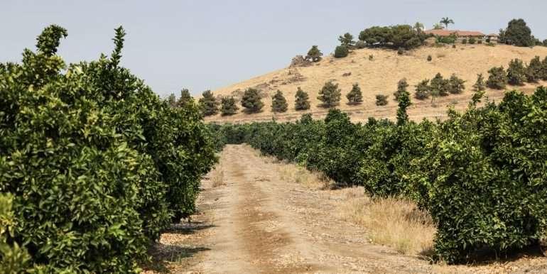 Doug - 36 Acres Citrus Rd 100 Dinuba extras-6