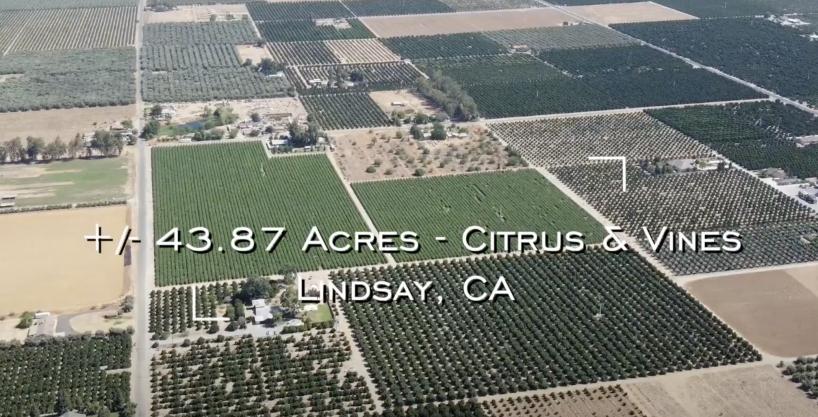 +/-43.87 Acres – Citrus & Vines – Lindsay, CA