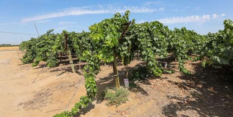 Stephen 48 acres citrus and vines trellis-2